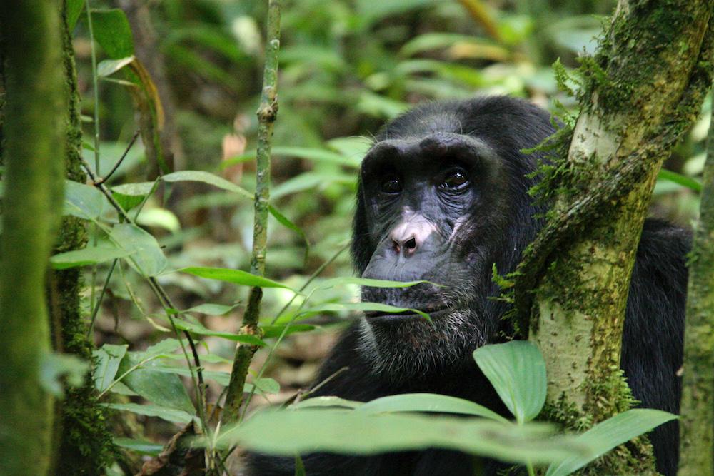1600818546 159 Las 10 mejores experiencias de safari en Uganda
