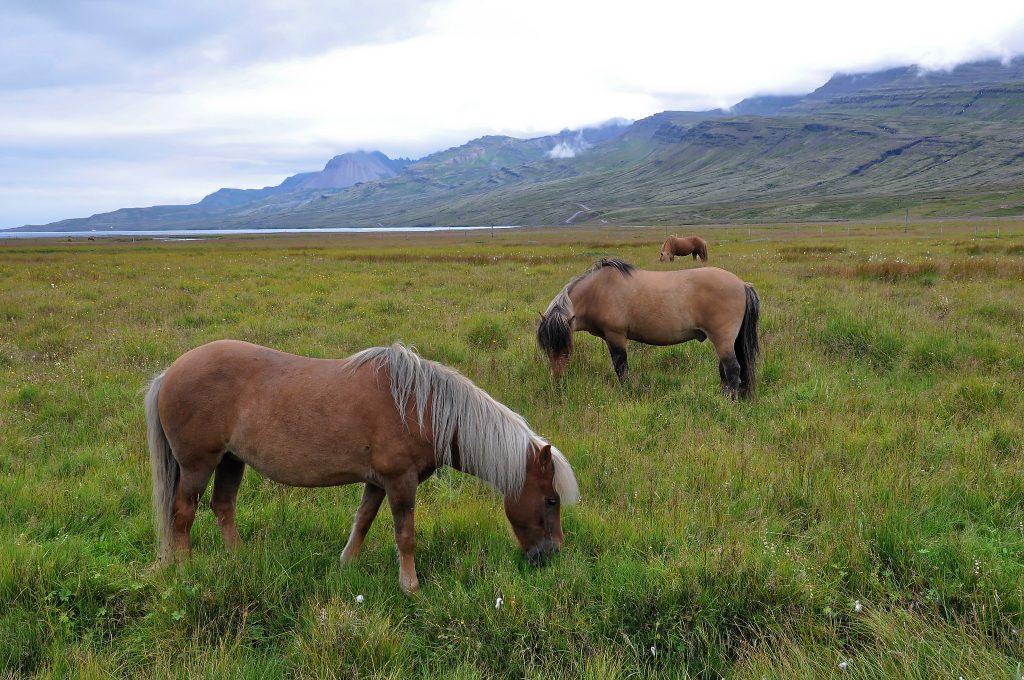 1600880902 68 Viaja a la naturaleza y la cultura en los fiordos