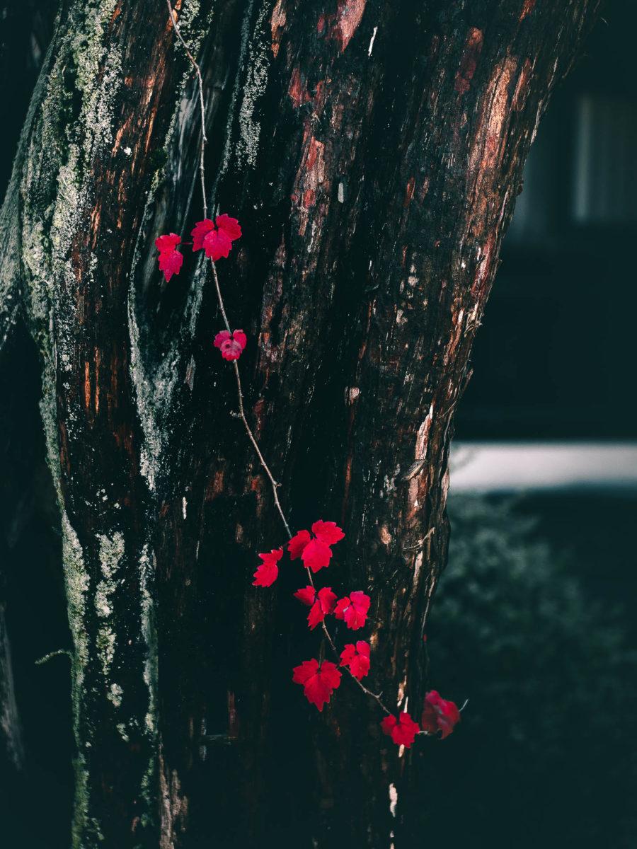1600942431 613 Hida Furukawa camina en Japon inspiracion de Your Name