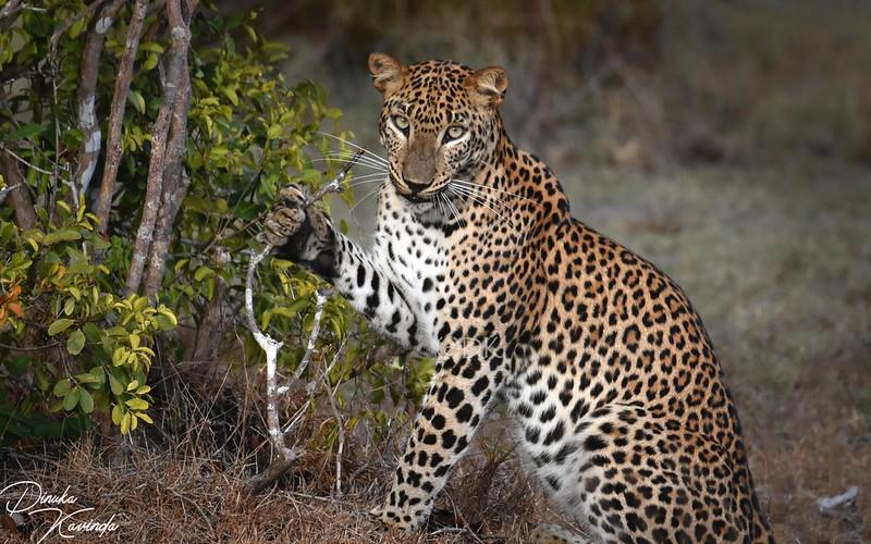 Parque Nacional Wilpattu Sri Lanka