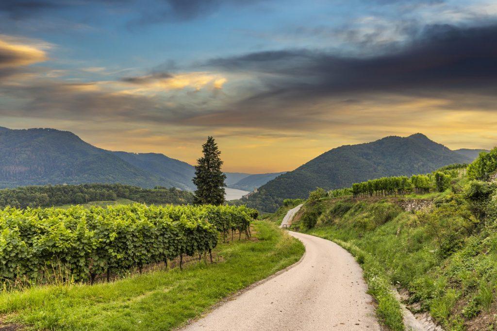 viñedos austria