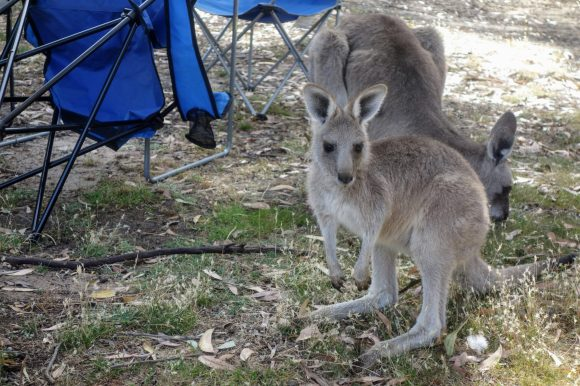 1601326006 296 Australia viaje por carretera de 2 meses con un bebe