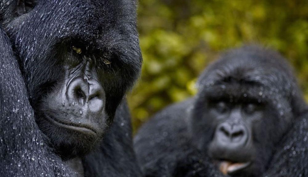 Las 10 mejores experiencias de safari en Uganda