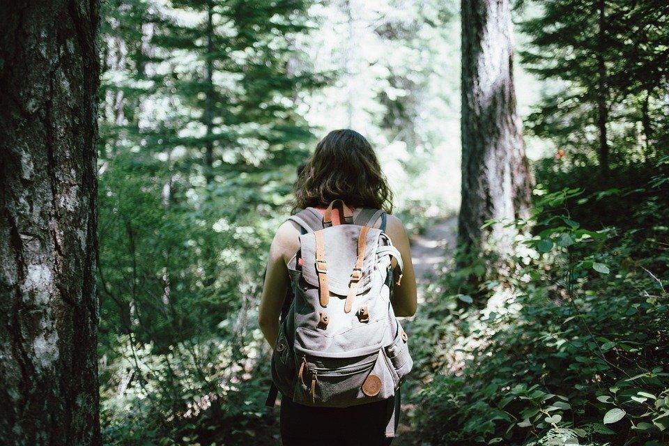Caminante, Mochilero, Senderismo, Bosques