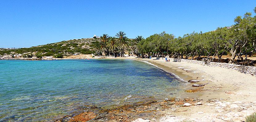 Playa de Agia Irini en Paros