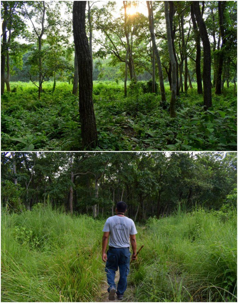 Paseo por la jungla de Chitwan