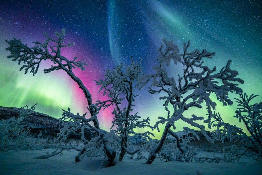 Laponia Aurora Boreal en invierno - Árbol de hadas