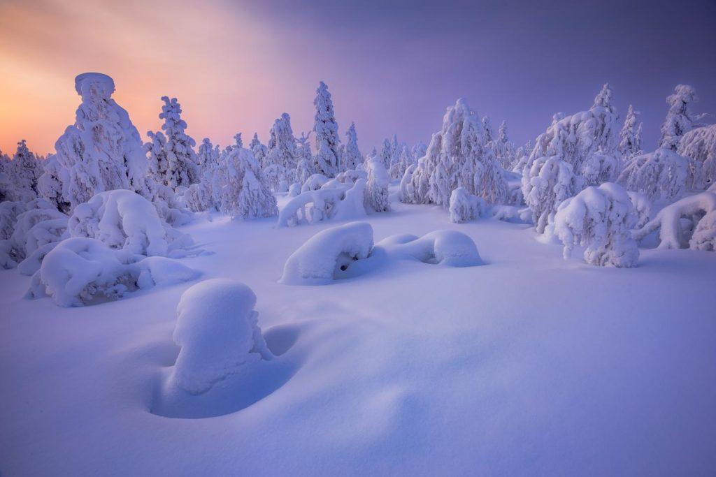 Invierno de Laponia Finlandia árboles cubiertos de nieve y hermosos colores