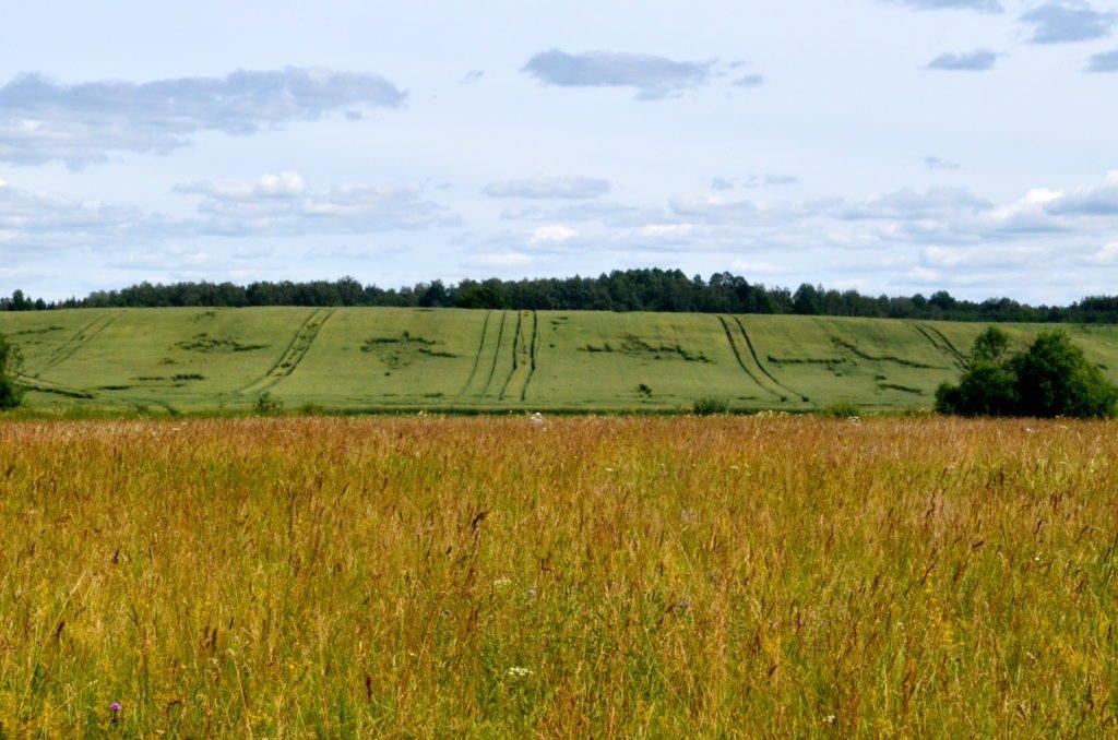 campos de trigo en letonia