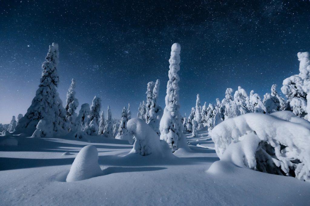 Bosque finlandés bajo la nieve en Laponia