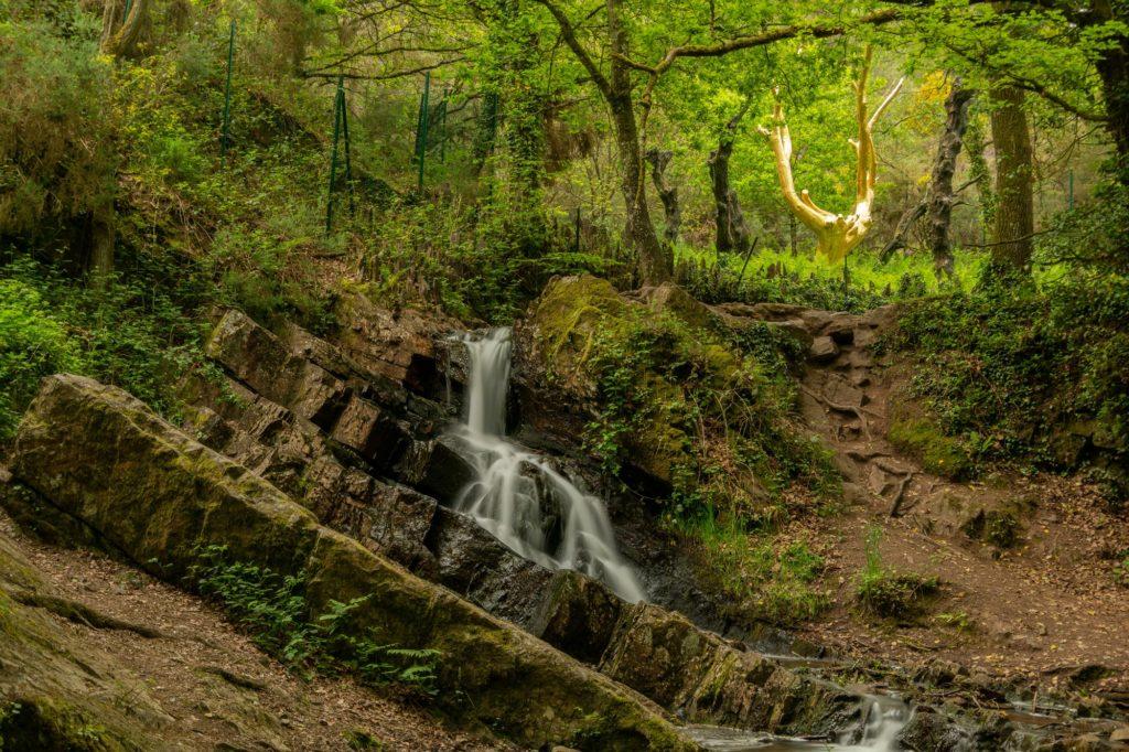 el árbol dorado en el bosque de Brocéliande