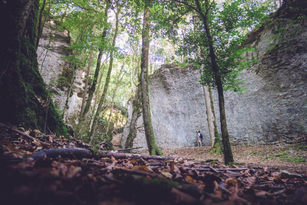 En el corazón de los bosques del Alto Marne