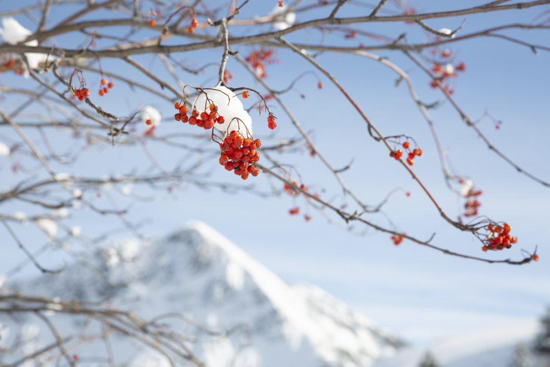 1611673949 581 Imagenes de un invierno en la montana sin remontes
