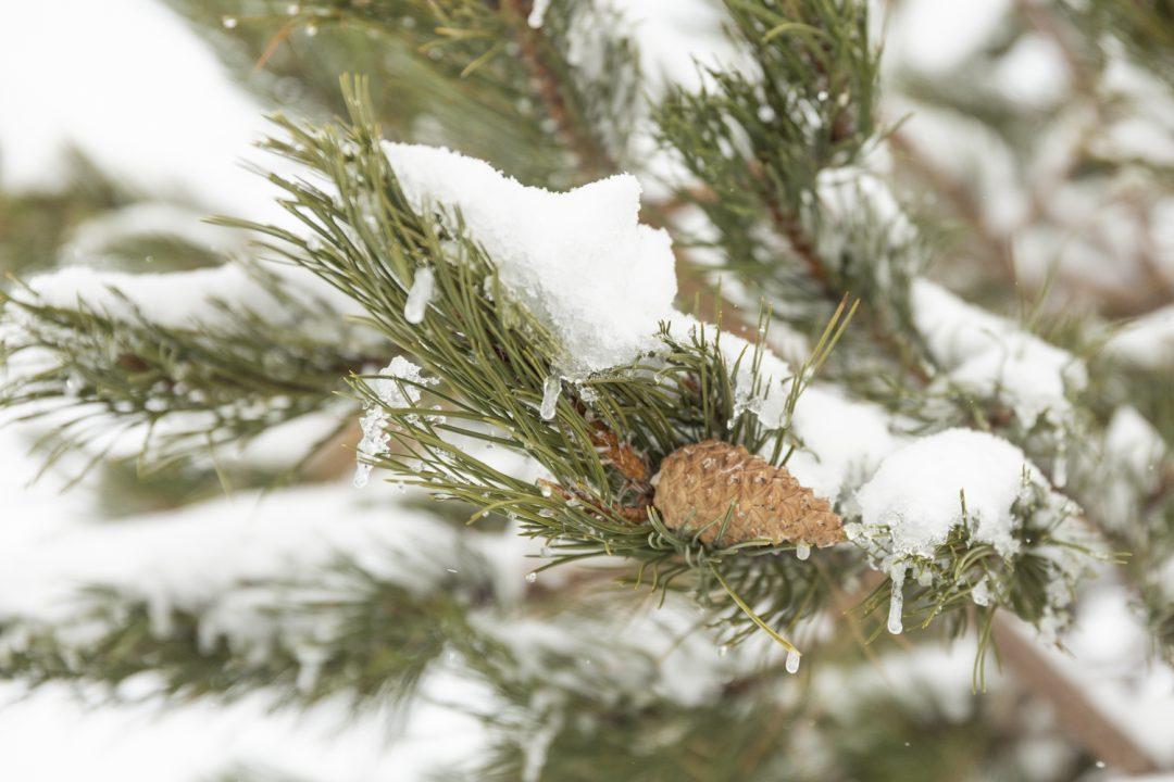 1611680521 127 Imagenes de un invierno en la montana sin remontes