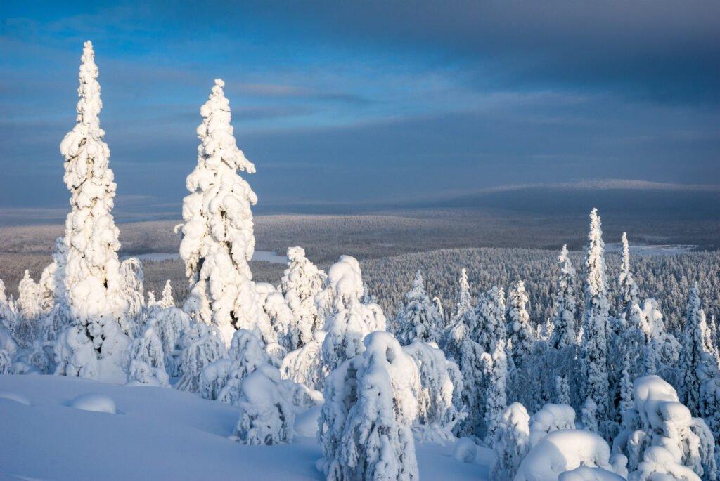 taiga finlandia