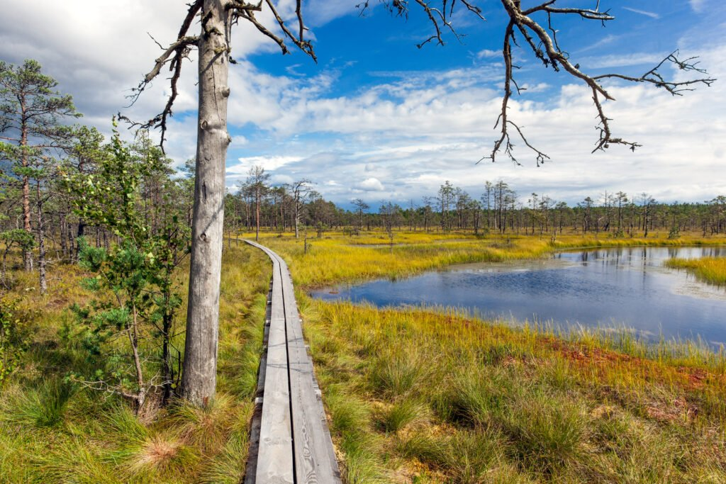 viru pantano en Estonia