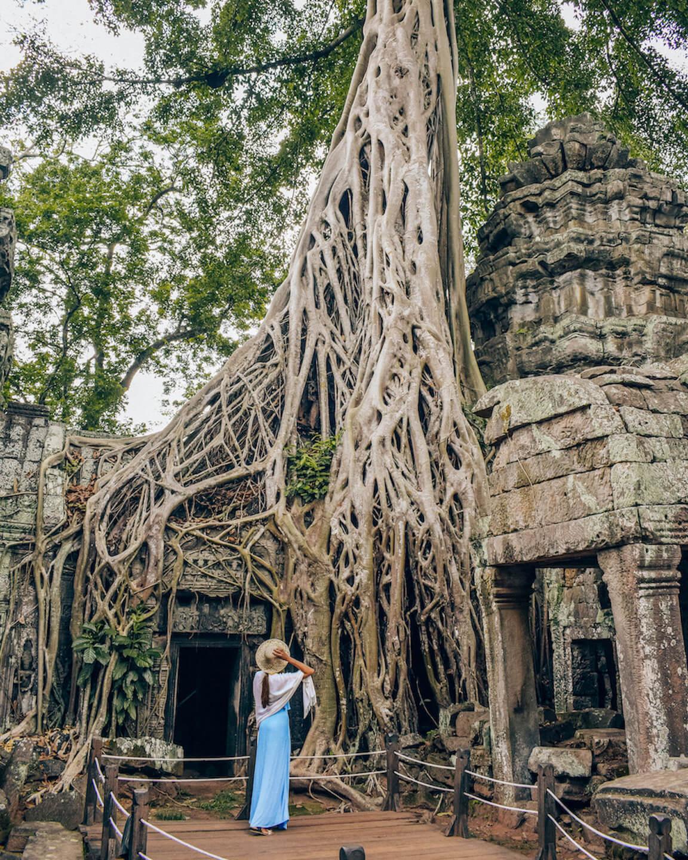 Banyan Tree cultivado en el templo de ta Prohm en Angkor.
