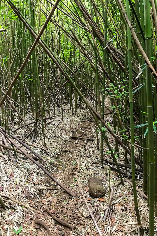 Bosque de bambú de Hawaii