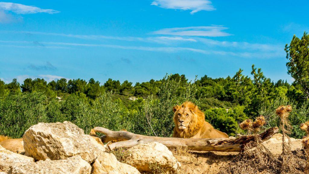 León de Sigean