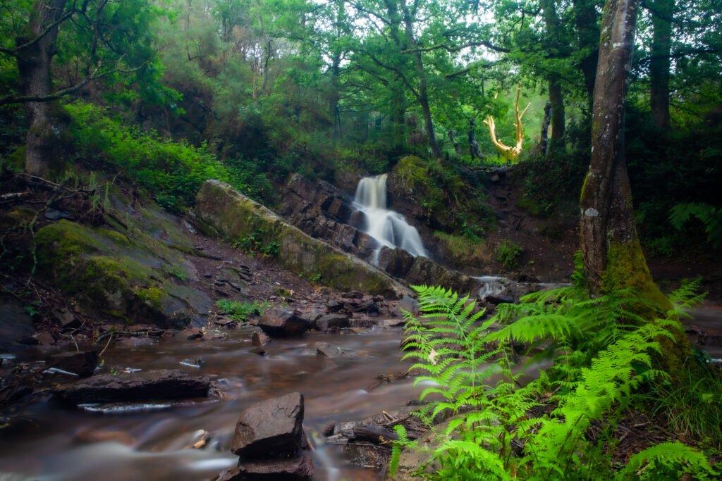 Bosque de Brocéliande en Bretaña