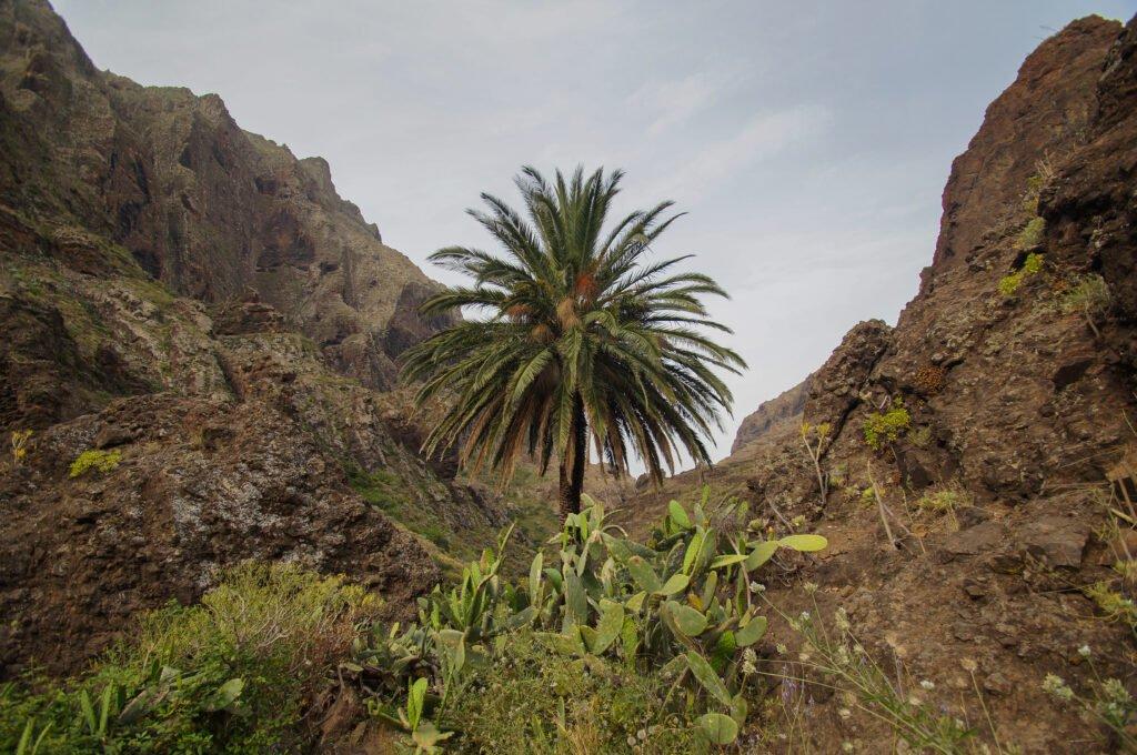 Gargantas de Masca que hacer en Tenerife