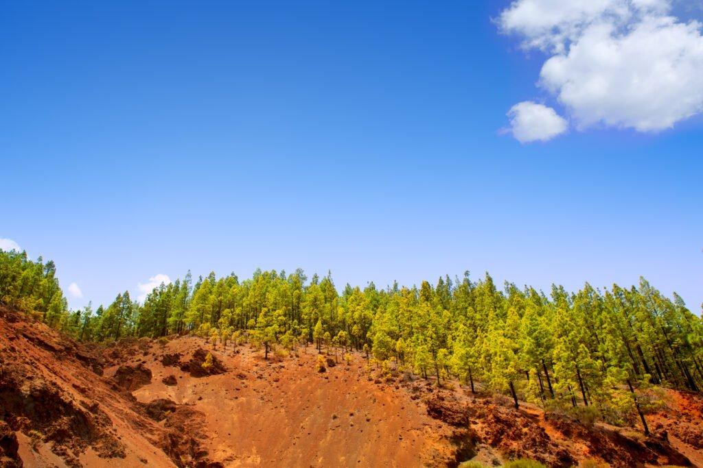 Corona Forestal Tenerife