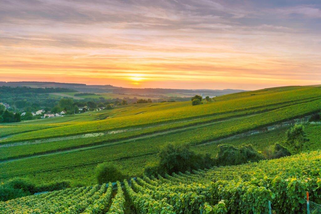 Vuela sobre los viñedos de Reims
