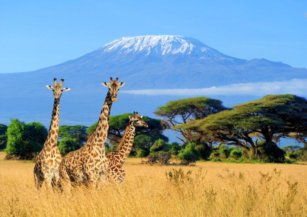 visitar Kenia
