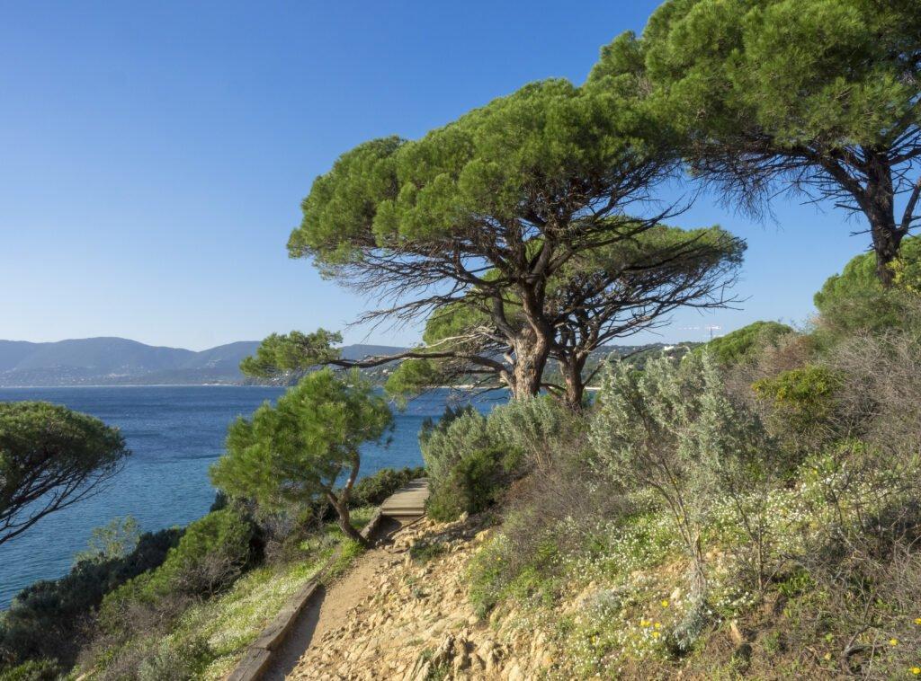 ruta costera para hacer en Saint-Tropez