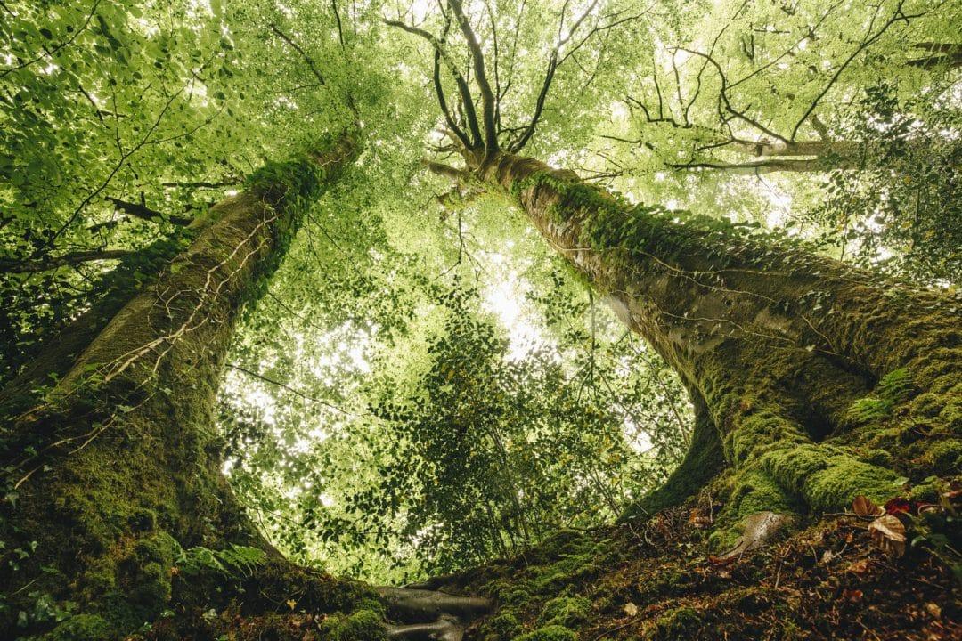1624268442 600 Ideas para excursiones por la naturaleza en Sarthe