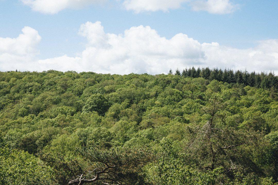 1624268443 411 Ideas para excursiones por la naturaleza en Sarthe