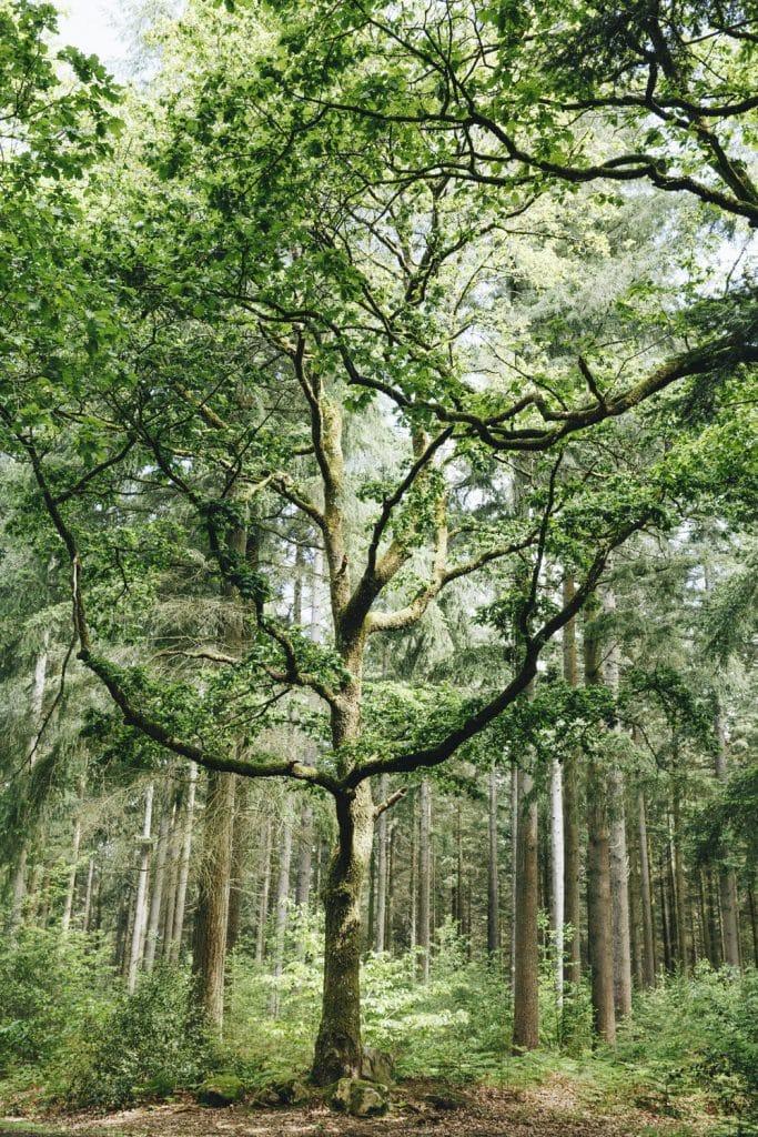 1624268443 608 Ideas para excursiones por la naturaleza en Sarthe