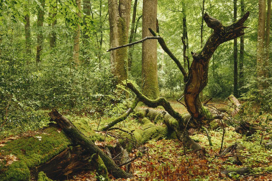1624268443 756 Ideas para excursiones por la naturaleza en Sarthe