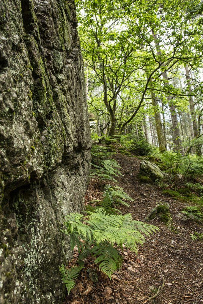 1624268443 791 Ideas para excursiones por la naturaleza en Sarthe