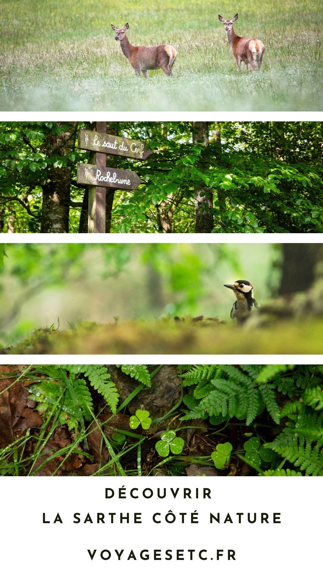 Descubra la Sarthe desde el lado natural: ¿bosque estatal de Bercé o Alpes Mancelles?