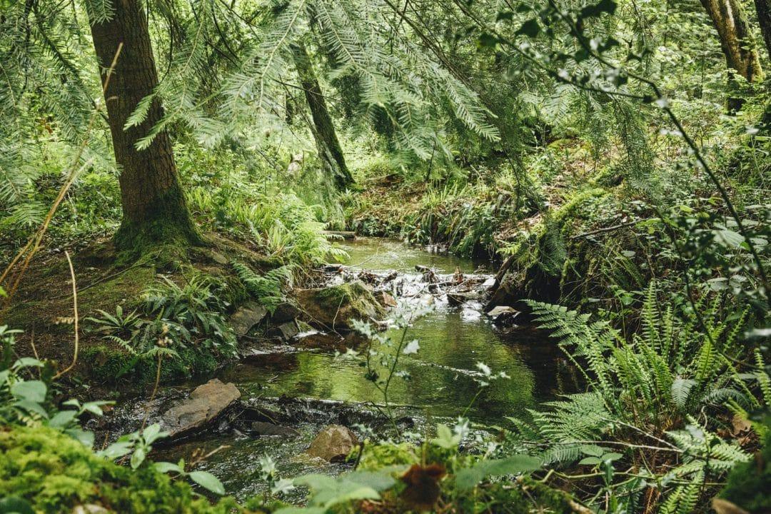 1624268444 278 Ideas para excursiones por la naturaleza en Sarthe