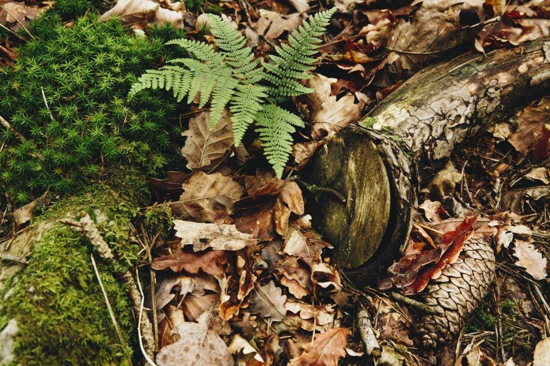 1624268444 319 Ideas para excursiones por la naturaleza en Sarthe
