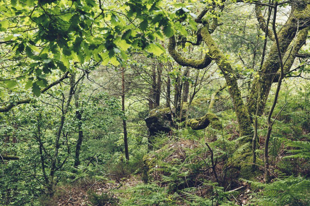 1624268444 999 Ideas para excursiones por la naturaleza en Sarthe