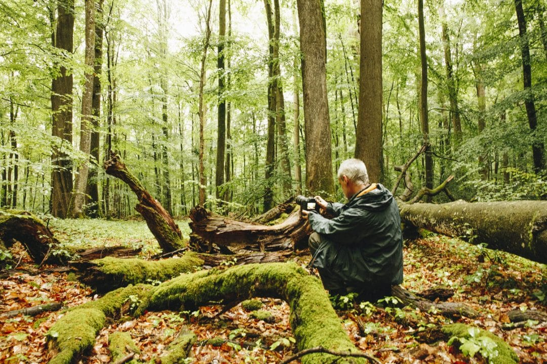 Ideas para excursiones por la naturaleza en Sarthe
