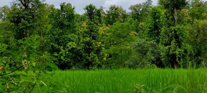 Greenery in Dang