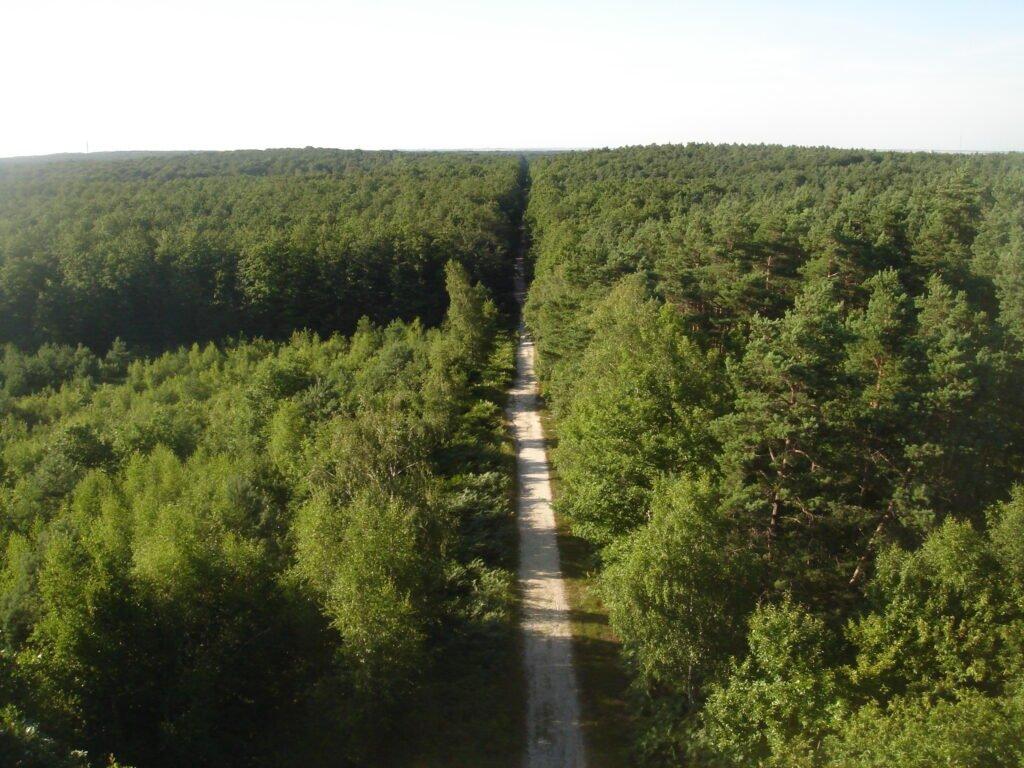 bosque de Orleans
